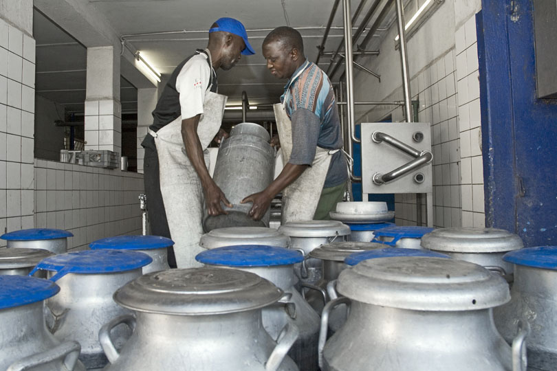 Dairy workers, Zambia