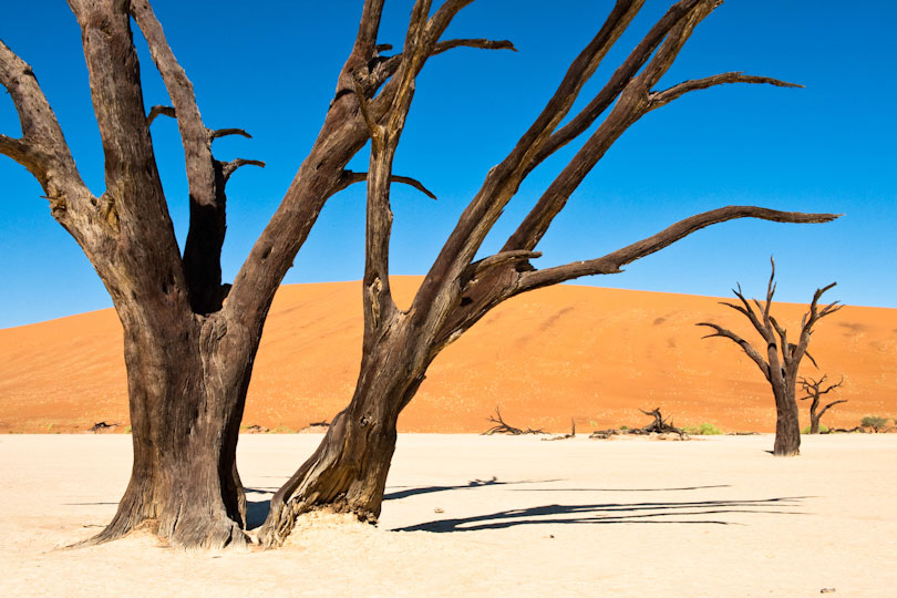 Dead Vlei at Sossusvlei with dead Acacia trees, Namib Naukluft Park Namibia